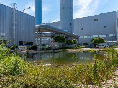 Medzinárodný deň biodiverzity v automobilke Volkswagen: 1 800 stromov medzi výrobnými halami