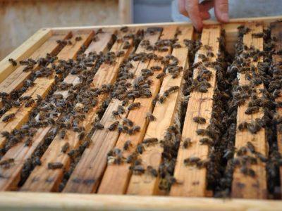 YIT poskytlo domov 60 000 včelám