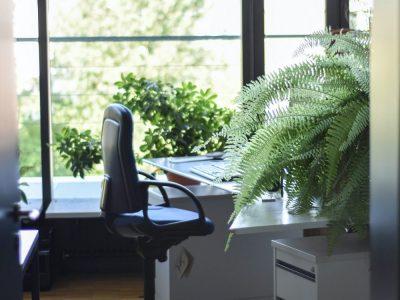 Ako vo firme zaviesť ekologické štandardy a znížiť svoju uhlíkovú stopu?